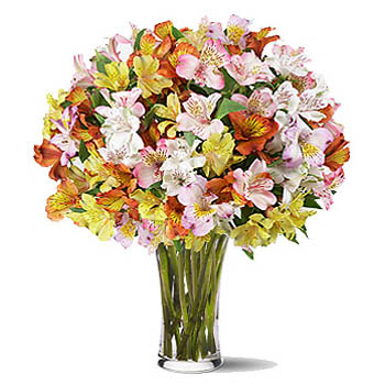 Alstroemeria BouquetAlstroemeria Bouquet
