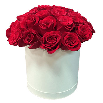 Red Roses in a Round White Box