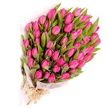 Two Dozen Pink Tulips in a Bouquet