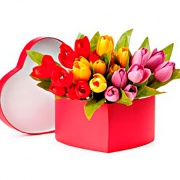 Heart shape gift box of tulip flowers