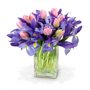 Bouquet Pink Tulips & Blue Iris