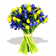 Yellow Tulips - Blue Iris Bouquet
