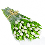 Two Dozen White Tulips in a Bouquet